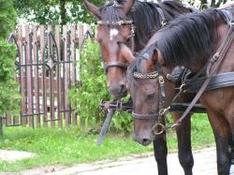 Pferdekutschenfahrten und Schlittenfahrten